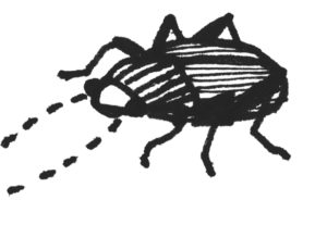 Käfer1