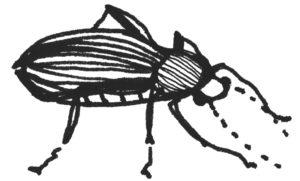 Käfer3