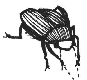 Käfer4